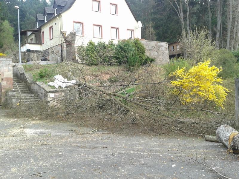 baumfaellung-wildflecken-rhoen-baum-faellung-linde-20140405_110051